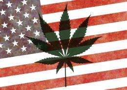 cannabis legalization