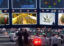 trump-admin-war-on-cannabis