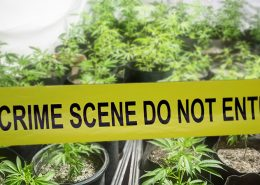 Santa Barbara County Police Shuts Down Illegal Cannabis Operation